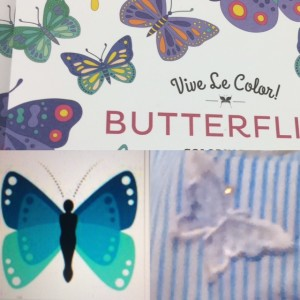 blue-butterflies-more