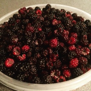 Black Raspberries from our woods